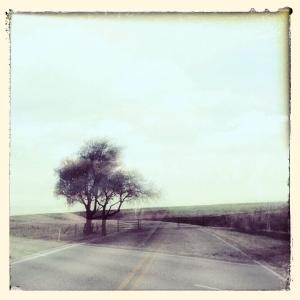 Tree Extra